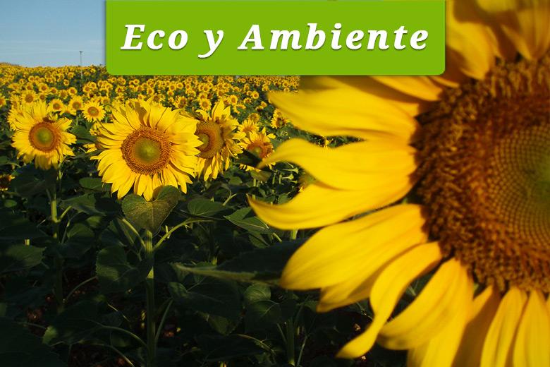 Eco y Ambiente es un emprendimiento en Belgrano (Capital Federal) que se dedica a la comercialización de productos ecológicos para hogares, jardines, huertas y campos.